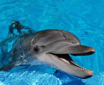 Dolphinarium in Truskavets